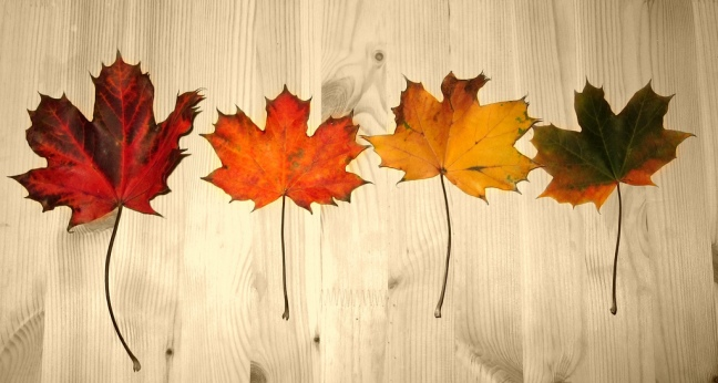 fall-leaves-rainbow-colors